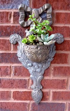 Succulents in a pretty wall pocket