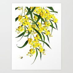 The Golden Wattle Art Print by meiyong Watercolor Flowers Tutorial, Watercolor Art, Acacia, Wall Art Prints, Canvas Prints, Australian Native Flowers, Nature Drawing, Diy Canvas, Painting For Kids