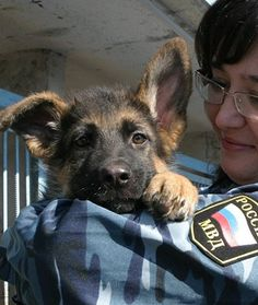 Russia is sending a German shepherd puppy to France to fill the void left by Diesel, the 7-year-old Belgian Malinois who died in the raid.