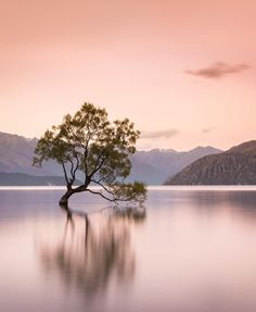 Dramatic Landscapes and Epic Outdoor Photography by Tom Archer Reflection Pictures, Scenery Pictures, Cool Pictures, Landscape Pictures, Beautiful Pictures, Tree Photography, Outdoor Photography, Landscape Photography, Dramatic Photography