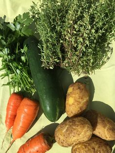 Weisst du schon, was du nächste Woche kocht? - Auf meinem Blog findest du ein paar Vorschläge, mit Gemüse aus dem Gemüsegarten. #gartenblog #food #kochenisttoll Feta Salat, Carrots, Vegetables, Food, Inspiration, Harvest, Meal, Cucumber Vegetable, Amazing
