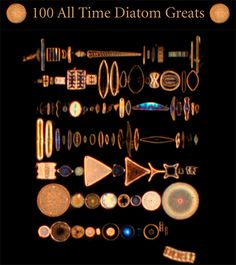 Top 100 All Time Diatoms Greats, mouse over each one for their name and hyperlink