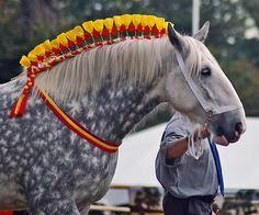 Лошадиная Грива, Девушка И Лошадь, Ломовая Лошадь, Клейдесдаль, Конский Волос, Конский Хвост, Животные, Дикие Лошади, Юмор О Животных