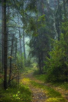 Forest path [unable to determine location or photographer]