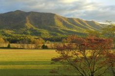 Cade's Cove, and 11-mile drive through the Smokey Mountains National Park in Tennessee. Beautiful drive with great historical significance.