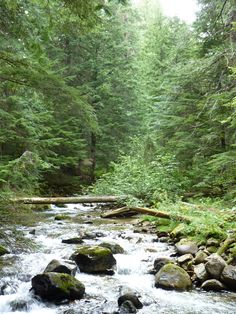 Gold creek west of Priest Lake Idaho