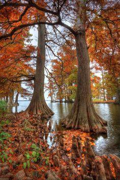 ✯ Twin Cypress
