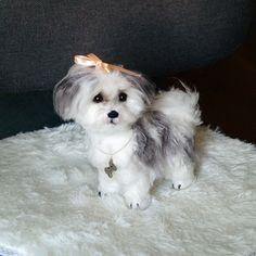 Needle Felted Custom Maltese Dog Shih Tzu pet от AmiraliFelt