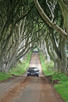 Dark Hedges in Northern Ireland