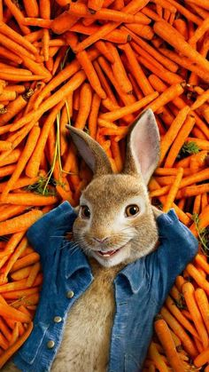 peter rabbit wallpaper by georgekev - 87 - Free on ZEDGE™ Hoppy Easter, Easter Eggs, Peter Rabbit Wallpaper, Funny Easter Pictures, Easter Funny, Ostern Wallpaper, Easter Party, Animals And Pets, Iphone Wallpaper