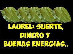 LAUREL para ATRAER DINERO, la BUENA SUERTE y ENERGIAS POSITIVAS!!!! - YouTube