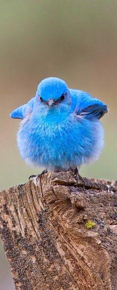 Birds ~ Dreamy Nature