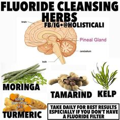 Repost/Follow @holisticali Here's a few good herbs for fluoride cleanse I would follow the instructions on the packaging and you'll get great results. You can find all these at a health food store or online. Definitely should be drunk regularly especially if no fluoride filter is present. Fluoride: A Neurotoxin That Damages Your Pineal Gland If youve never heard of the pineal gland know its got a pretty important job. Located in the center of the brain its responsible for melatonin…