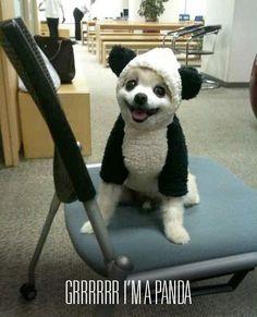 cute panda dog!