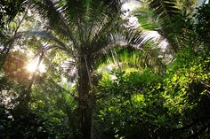 the rainforest - Google Search