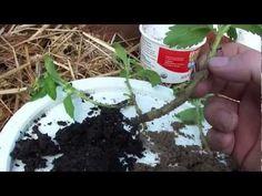 Kitchen Herb Planter With Automatic Watering - Youtube | Gardening ... Kuchen Garten Urban Cultivator Gewurze