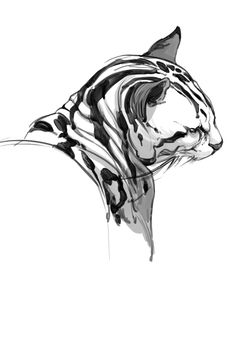 Finally sketching more! Animal Sketches, Animal Drawings, Art Sketches, Cat Drawing, Painting & Drawing, Sketch Drawing, Illustration Art, Illustrations, Photo Chat