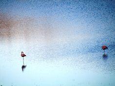 Flamingos - Parque Nacional Torres del Paine - Viagem com Sabor