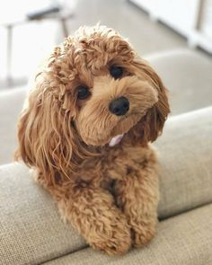 Be the person your dog thinks you are 🐶😍 Cute Dogs Breeds, Cute Dogs And Puppies, Baby Dogs, Pet Dogs, Pets, Cutest Dogs, Doggies, Cutest Small Dog Breeds, Cutest Dog Ever