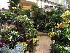 Our in-store, extended, houseplant department is the biggest and best in London! We stock a sizeable and diverse selection of beautiful houseplants, perfect for decorating and brightening you home and office spaces. Londoners from far afield travel to Camden Garden Centre to be inspired by our fabulous selection of houseplants.