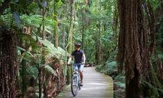 Image result for Pureora Forest Park bridge North Island New Zealand, Forest Park, Rafting, Trail, Mtb, Image, Bridge, Bucket, Buckets