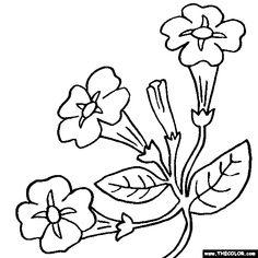 petunia flower coloring page color petunias