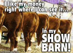 Love this but would use pig butts! I like my money right were I can see it. In the show barn! Livestock Motivation by Ranch House Designs. Livestock Judging, Livestock Farming, Showing Livestock, Cattle Barn, Show Cattle, Beef Cattle, Cow Quotes, Horse Quotes, Farm Quotes