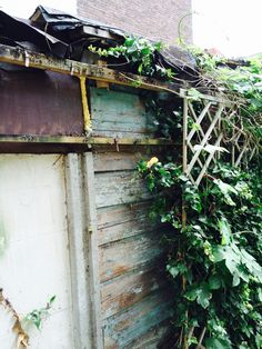 The back of the garden: a rotten wooden wall that belonged to the people who live behind us.
