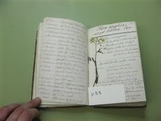 NLS Conservation: 19th Century Naturalist Notebook with Specimens