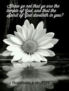 1 Corinthians 3:16 KJV