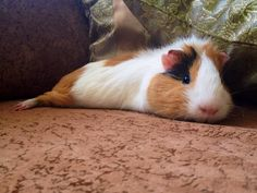 """""""what you doin?"""" """"oh just doin piggie stretches"""""""