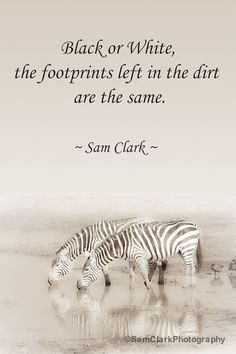 SALE - PHOTOS with WORDS , Wildlife Photography, Inspired Quote, African Proverb, Animal Photo, Nature Photo, Safari Animal, Wall Art, Zebra