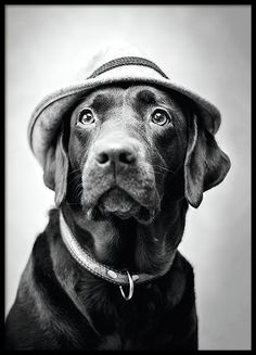 Cute poster with a photograph of a dog with hat. Black and white print printed on matte, uncoated paper of high quality. www.desenio.com