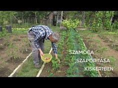 Szamóca szaporítása kiskertben Goldperger Andrással - YouTube Garden, Youtube, Garten, Lawn And Garden, Gardens, Gardening, Outdoor, Youtubers, Youtube Movies