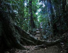 Floresta da Tijuca - Rio de Janeiro / Brazil A 12.4mi² urban hand-planted Rain Forest in the middle of the city.