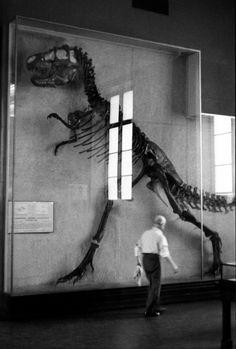 Elliott Erwitt Museum of Natural History, New York City 1953