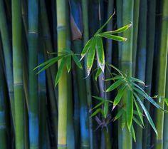 nice 綺麗な竹林 Androidスマホ壁紙