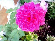 Mais uma flor nascer cem intenção em meio ao caos do tempo...