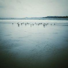 #atardecer nuboso en la #playa de Latas #cantabria #spain #seascapes #nature #naturaleza #beach #gaviotas #seagull #cloudy #sunset #snapseed #playaDeLatas