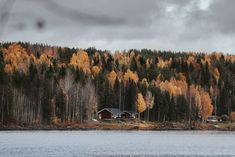things to know before visiting Swedish Lapland - the autumn colours Forest Falls, Visit Sweden, Winter Landscape, Amazing Destinations, Things To Know, Us Travel, Wilderness, Wander, Travel Inspiration