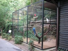 macaw zoo enclosure - Google Search