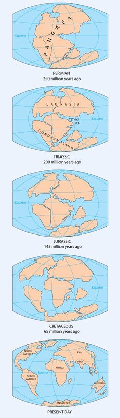 Pangea Continent Map – Continental Drift – Supercontinent Source by magslave Earth And Space Science, Earth From Space, Science And Nature, Structure Of The Earth, Pseudo Science, Plate Tectonics, Historical Maps, Continents, Fun Facts