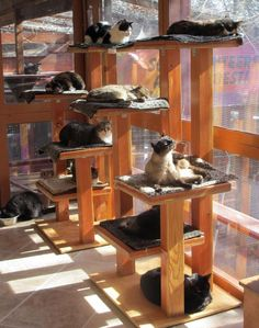 Love this! ~ Picture taken from Shadow Cats Sanctuary in TX, [http://www.shadowcats.net]. Cat tree built by The Cat Carpenter [http://www.thecatcarpenter.com/index.htm] #CatRoom #CatLove