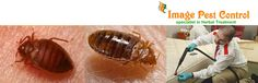 Bed Bugs Control and Exterminators Bangalore