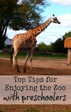 Top tips for taking little ones to the zoo.