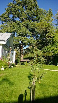 Lönntorp i Dalsvik -: Eken