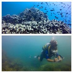 Yesterday our marine volunteer, Kiley, accomplished her dive! Here she is surveying fish on the reef -- congrats Kiley Diving School, Diving Course, Padi Diving, Fish, Adventure, Travel, Image, Viajes