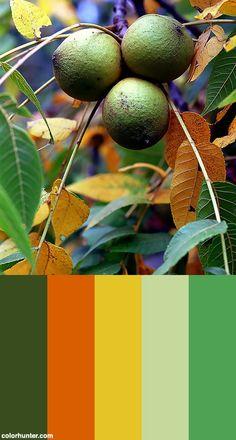 "Cincinnati – Spring Grove Cemetery & Arboretum ""autumn Fruit"" Color Scheme from colorhunter.com"