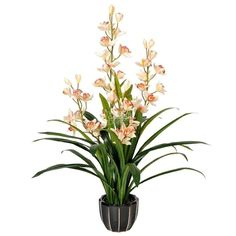 The orchid is the national flower of Venezuela, Colombia, Singapore, and Costa Rica, where the plant is said to represent love, luxury, beauty, and strength. Sy