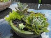 Succulent Balls, Globes and Spheres  Create Your Own Unique Succulent Topiary